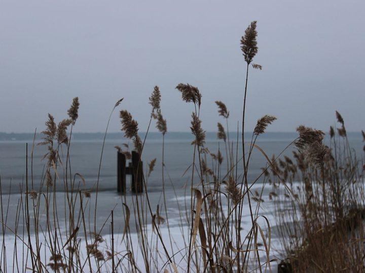 Winterblues, Vorfreude oder: was war, was wird?