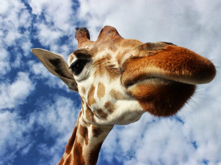 Von Safari, Hindernissen und Pumas – der Survival Run
